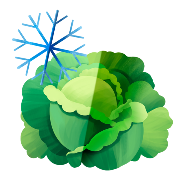 Eissymbol Kopfsalat