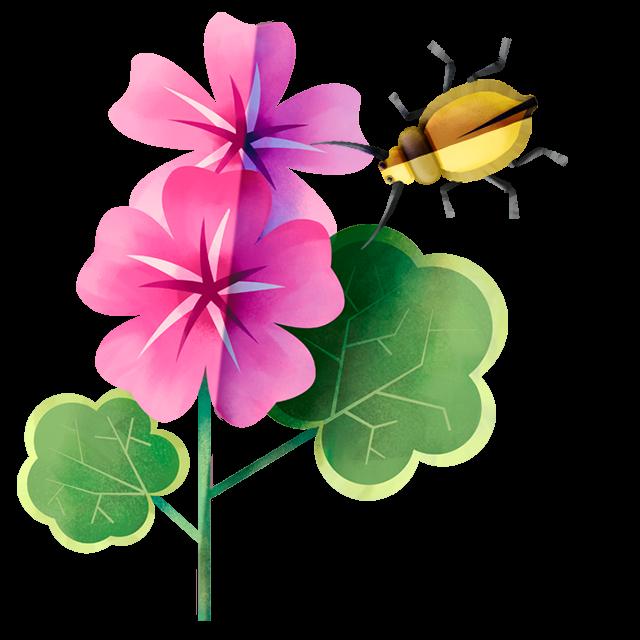 Käfer Geranie