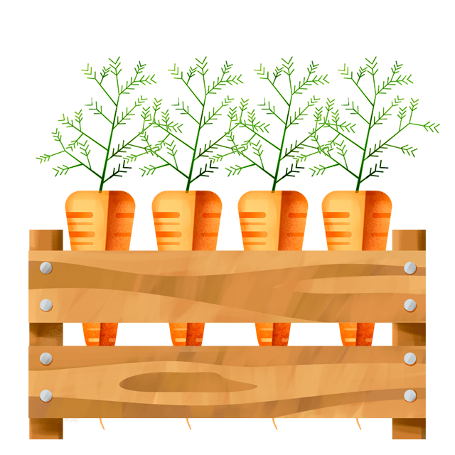 Kiste Karotten