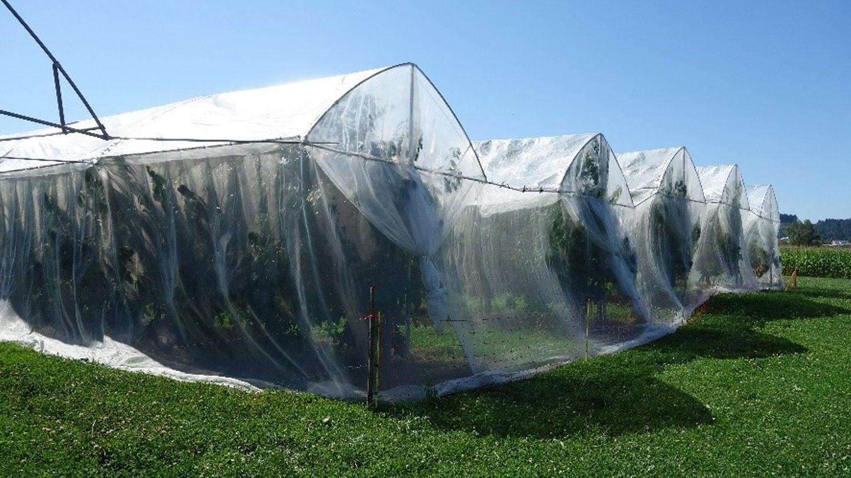 Mit Netzen gegen die Kirschessigfliegen